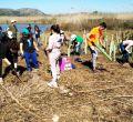 Voluntarios del Gob plantan 90 árboles en la Albufera