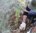 Repoblación Bosc de Bellver y Es Carnatge
