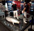 Ronqueo de atún en El Corte Inglés de Avenidas