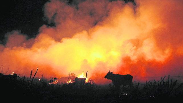 Asturias exige que se esclarezca el origen de los 100 incendios