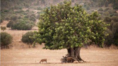 ASAJA pide que la ecotasa se destine al medio rural