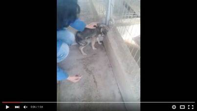 La reacción de un perro maltratado a las caricias enternece a los internautas
