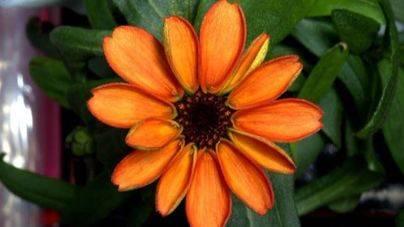Nace la primera flor cultivada en el espacio
