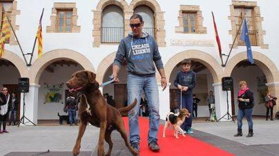 Los perros de Can Dog, modelos en Santa Eulària