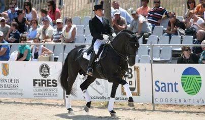 La XX Feria del Caballo de Raza Menorquina exhibe 91 equinos