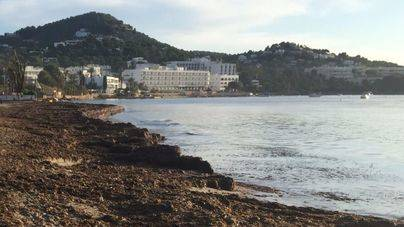 Vila retira la posidonia de las playas mediante un nuevo sistema