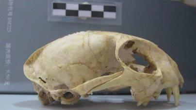 Los gatos fueron domesticados en China hace más de 5.000 años