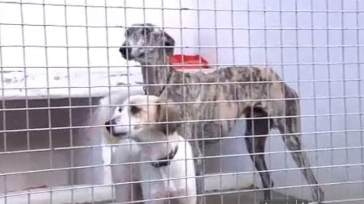 Envenenados y torturados hasta la muerte perros de un refugio de Sevilla