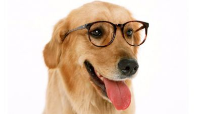 El coeficiente intelectual de los perros se puede medir