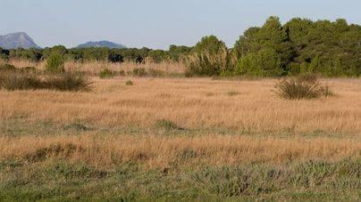 Una sentencia declara ilegal el campo de golf de Son Bosc