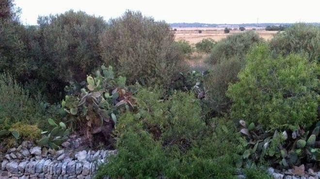 Las legalizaciones en suelo rústico crecieron en Balears un 243% en 2015