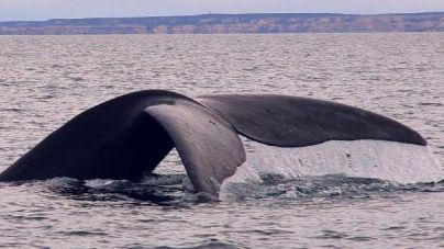 Corredor de cetáceos del mediterráneo