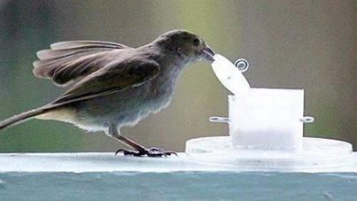Vivir en la ciudad hace a los pájaros más inteligentes