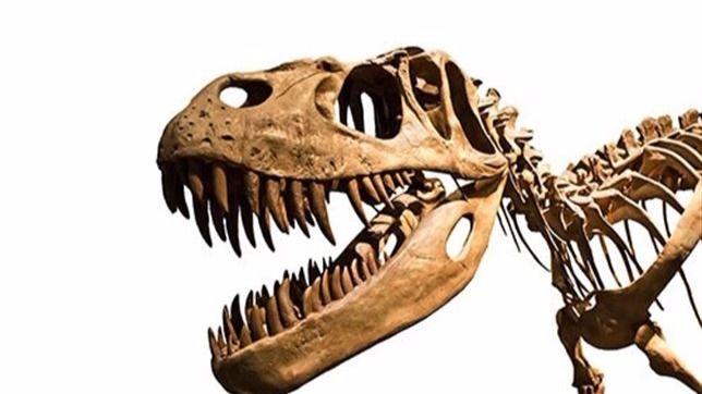 Imagen del esqueleto de un dinosaurio