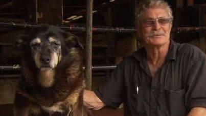 Muere el perro más viejo del mundo