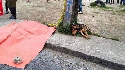 Imagen del perro junto al cadáver de su dueño