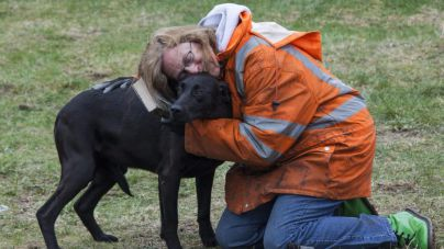 Los perros odian que les abracen