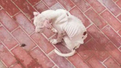 PACMA denuncia al dueño de la perra del Coll d'en Rabassa