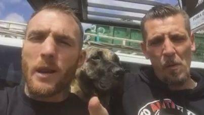 Un grupo de boxeadores pelearán este año por salvar al Toro de la Vega