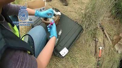 La Policía encuentra enterrados 25.000€ del clan de narcos desarticulado en Son Banya