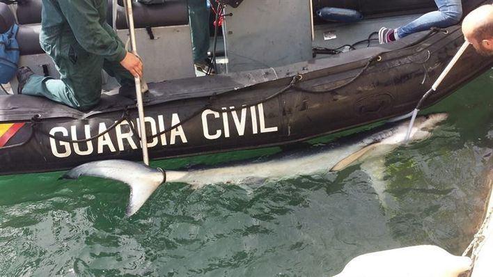 Tiburón II en Porto Pí