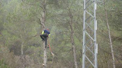 Endesa invierte más de 944.000 euros en la limpieza de masa forestal