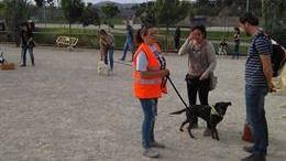Cort da inicio a la primera escuela urbana de perros