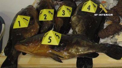 El Govern estrecha el cerco contra los pescadores furtivos en S'Albufera