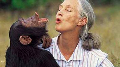 Jane Goodall se solidariza con el director del zoo que mató a un gorila en EE.UU