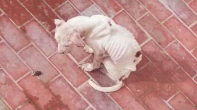 Abogados, jueces, fiscales y psicólogos analizarán en Palma el maltrato animal