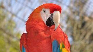 Algunos pájaros tienen más neuronas que primates como el macaco
