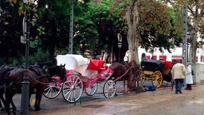 Muere desnucado un caballo de una de las galeras de Dalt Murada