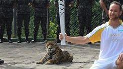 Muere abatido a tiros el jaguar que acompaña a la antorcha olímpica