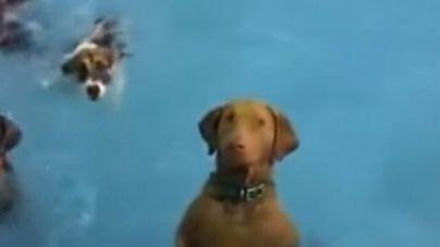 Beya, la perra inmóvil que vuelve locas a las redes sociales