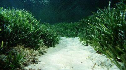 El 98% de la 'selva tropical' submarina de España está desprotegida