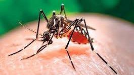 Nuevo caso de zika en Balears