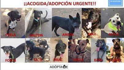 Paralizados los sacrificios en Son Reus tras la salida de 8 perros de la lista negra