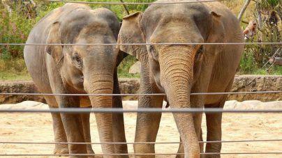 Un elefante mata en un zoo a una niña de 7 años