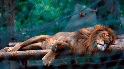 Decenas de animales se mueren de hambre en los zoológicos de Venezuela