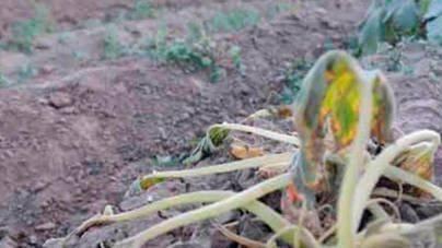 El Govern resucita el borrador del Plan de Sequía de Antich de 2009