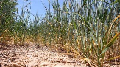 Asaja denuncia que Agricultura no haya pagado todavía la mayoría de las ayudas por la sequía