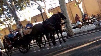 Los animalistas salen a la calle a concienciar a los turistas de las consecuencias de la galeras