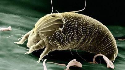La edad marca la respuesta alérgica a los ácaros del polvo doméstico