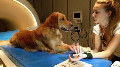 Los perros entienden palabras del habla humana