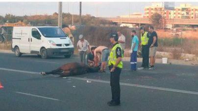 La Policía concluye que el choque de galeras que dejó un caballo muerto fue un accidente