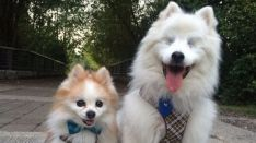 Viraliza la entra�able relaci�n entre un perro ciego y un cachorro