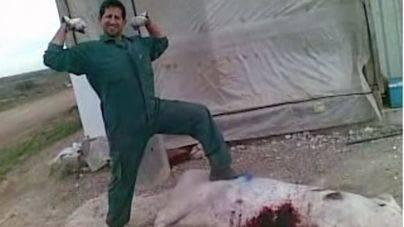 Los 2 trabajadores que torturaron a cerdos en Murcia no irán a la cárcel