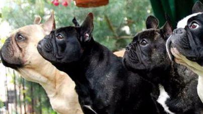 Palma acoge la Exposición Canina Nacional e Internacional en Son Pardo