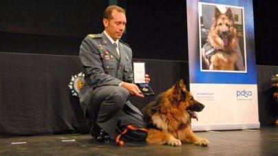 Los agentes que evitaron la masacre de ETA en Palmanova recibirán la medalla roja
