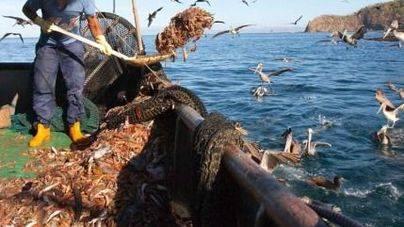 Abierto el plazo de solicitud de ayudas por las paradas temporales de pesca
